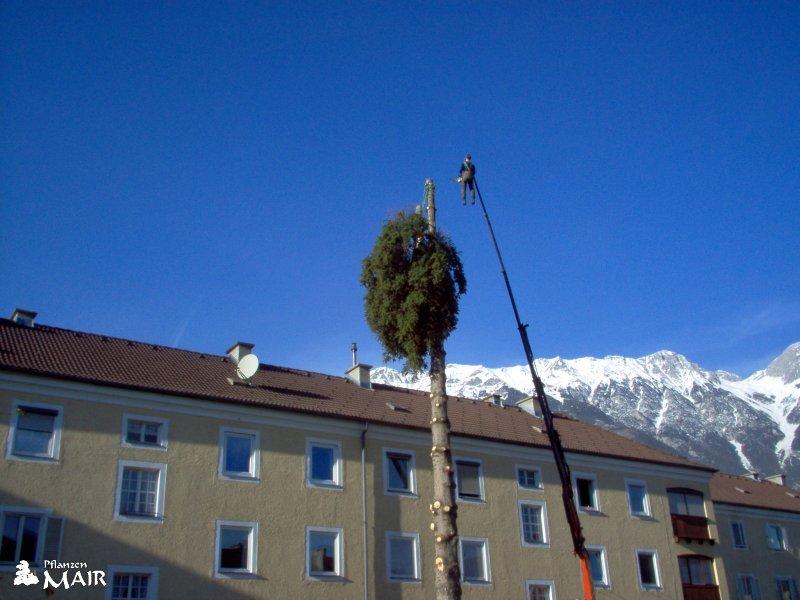 Baumschnitt tirol gartengestaltung tirol gartencenter for Gartengestaltung tirol