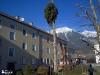 Bilder Baumschnitt Baumschneiden Tirol - Pflanzen Mair