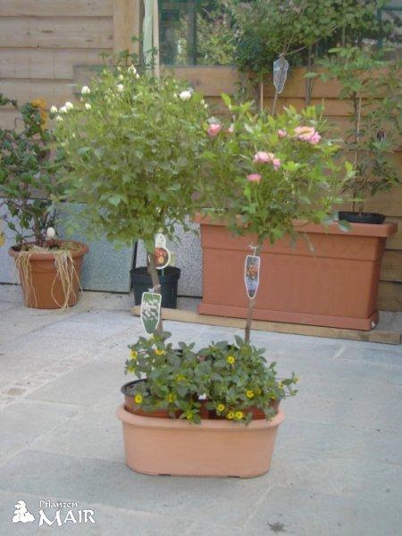 Bilder gartencenter gartengestaltung tirol for Gartengestaltung tirol