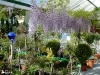 Bilder Gartencenter Tirol - Pflanzen Mair